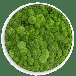 Озеленение мхом - Студия Фитодизайна