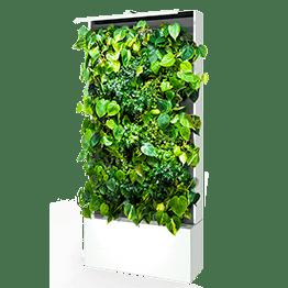 Вертикальное озеленение - Студия Фитодизайна