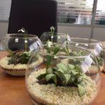 Корпоративный заказ, флорариумы 100 шт, подарки партнерам компании Monsanto