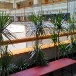 Растения в кашпо для офиса