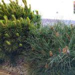 Растения в кашпо на террасе