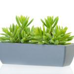 Растения в кашпо 0de4b7bfcab77283c17d48e0996d72f0 150x150