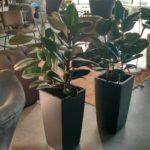Растения в кашпо 18835537 672013276323664 79484505646415906 n 150x150