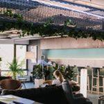 Растения в кашпо 19060149 319238798512566 4375777341882823498 n 150x150