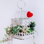 Флористика и декор DSC 0139 1 150x150