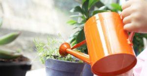Уход за растениями в Киеве Indoor Plants 300x156
