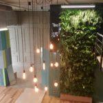 Вертикальное озеленение fitostenaofis 150x150