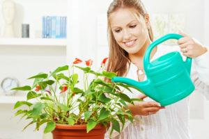 Киев уход за растениями
