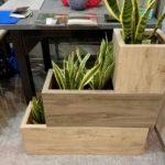 Растения в кашпо vystavka3 2 150x150