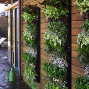 Вертикальное озеленение в Киеве fullsize 300x300