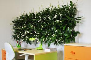 Заказать вертикальное озеленение в Киеве tradeboardPdrHLQ img 300x199