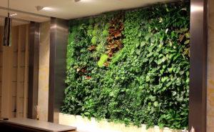 Вертикальное озеленение в Киеве vert sad 6 300x185