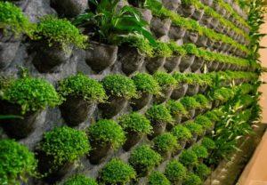 Вертикальное озеленение цена vertoz6 768x533 300x208