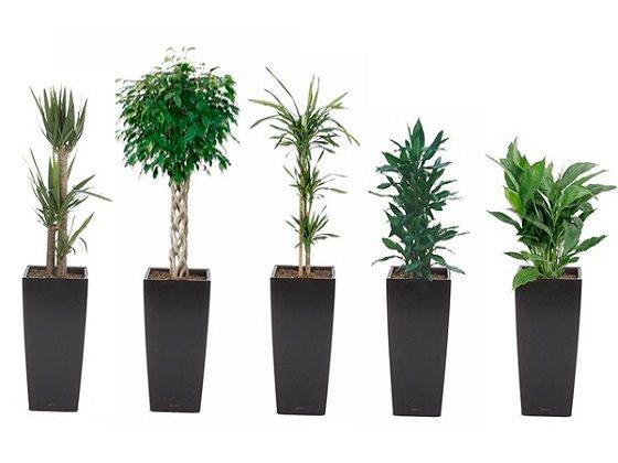 Растения в кашпо viber image