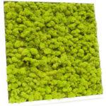 Озеленение мхом, стабилизированные растения 01 1 150x150