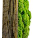 Озеленение мхом, стабилизированные растения 05 150x150
