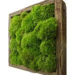 Озеленение мхом, стабилизированные растения 06 150x150