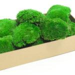 Озеленение мхом, стабилизированные растения 07 150x150