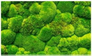 Озеленение мхом Киев 08 300x184