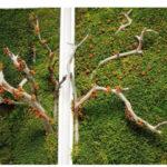 Озеленение мхом, стабилизированные растения 09 150x150