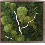 Озеленение мхом, стабилизированные растения 10 150x150