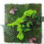 Озеленение мхом, стабилизированные растения 11 1 150x150