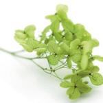 Озеленение мхом, стабилизированные растения 1101533804 w640 h2048 screenshot 2 150x150