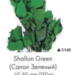 Озеленение мхом, стабилизированные растения 970839155 w919 h430 salal zelenyj 150x150