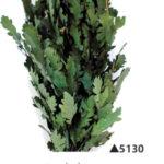 Озеленение мхом, стабилизированные растения 970959351 w640 h2048 dubovye listya 150x150