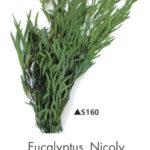 Озеленение мхом, стабилизированные растения 970975576 w640 h2048 evkalipt nikoli 150x150