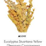 Озеленение мхом, стабилизированные растения 970993423 w640 h2048 evkalipt stuar  na zheltyj 150x150
