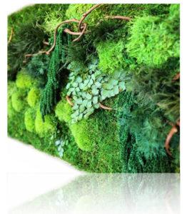 Озеленение мхом, стабилизированные растения Bezimeni 2 262x300