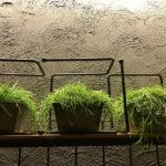 Растения в кашпо IMG 8803 150x150