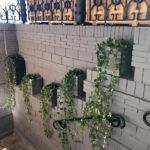 Растения в кашпо IMG 8809 150x150