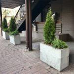 Растения в кашпо IMG 8813 1 150x150