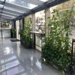 Растения в кашпо IMG 8830 1 150x150