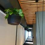 Растения в кашпо IMG 8839 1 150x150