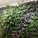 Вертикальное озеленение IMG 8888 1 150x150