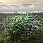 Вертикальное озеленение IMG 8896 1 150x150