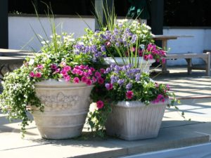 Растения в кашпо flower pot ideas 07 300x225