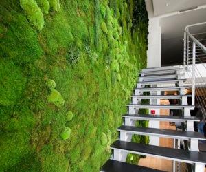 Киев Вертикальное озеленение