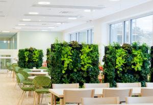 Озеленение ресторана, офиса ozelenenie office2 300x207