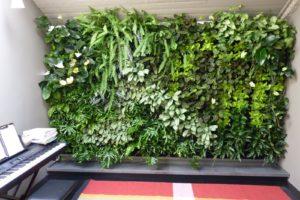Вертикальное озеленение цена 29 300x200