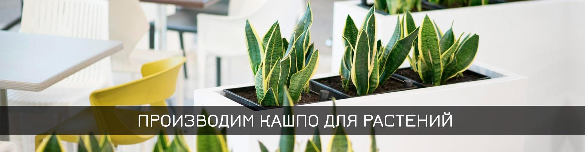 Растения для кашпо