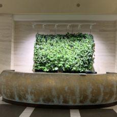Фитостена из живых растений, БЦ Леонардо