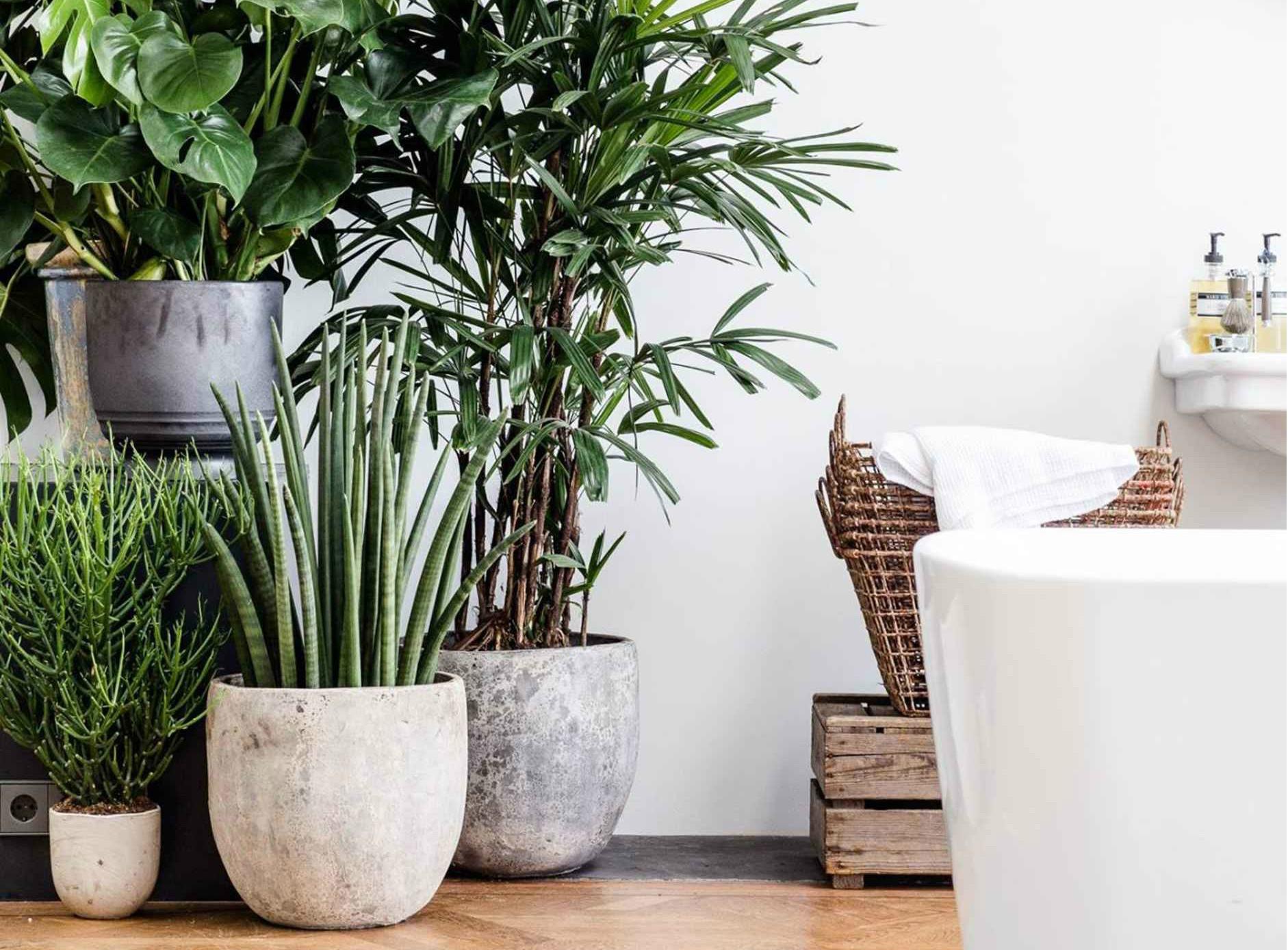 растения в кашпо купить