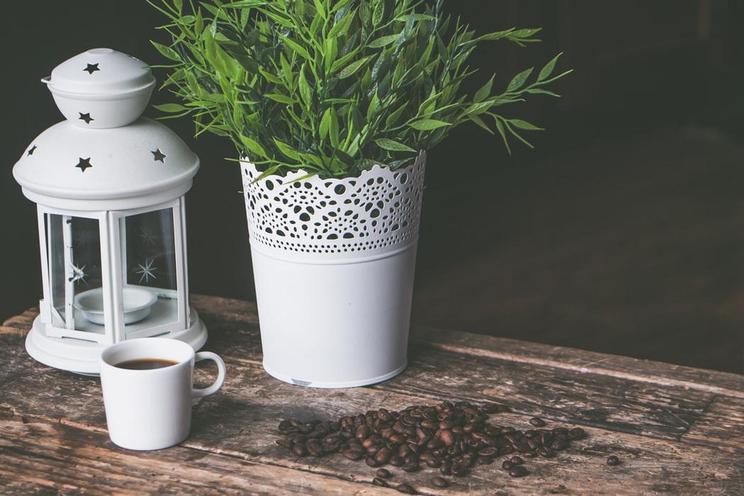 растения для озеленения в кашпо купить киев