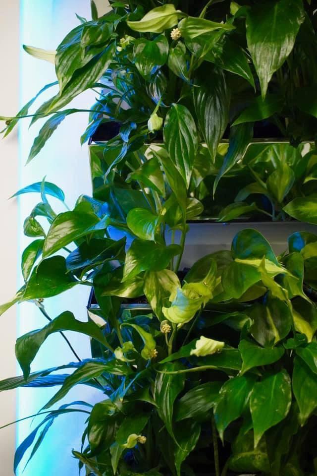 Вертикальное озеленение, заказать, вертикальное озеленение киев, фитостена киев купить
