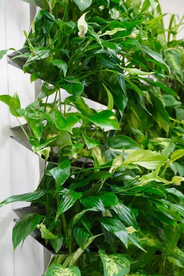 Изготовление фитостены, озеленение вертикальное фитостена в интерьере квартиры,