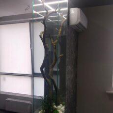 Фитодизайн, Дерево в аквариуме